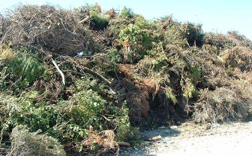 Utylizacja gałęzi , korzeni , wycinka drzew,rębak