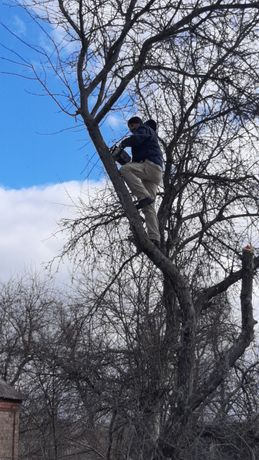 Спил и обрезание деревьев, высотные работы.