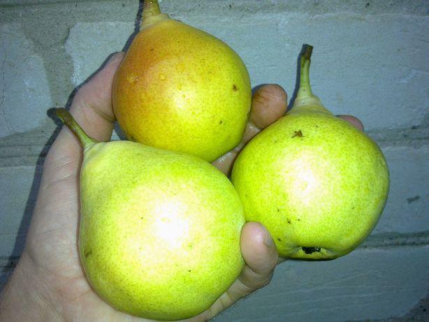 Сад-свой-продам грушу.