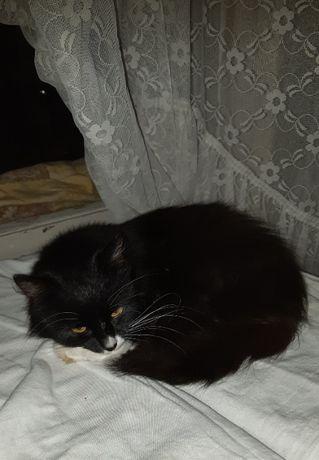 кішечка-підліток
