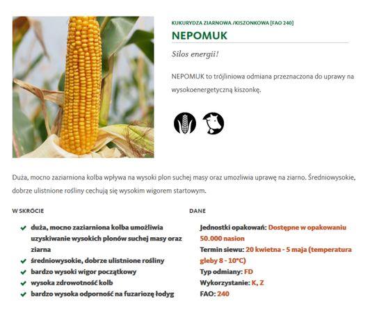 kukurydza Nepomuk z zaprawą na ptaka opti plus Saatbau