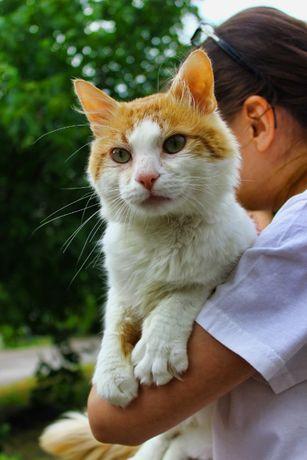 Кіт добряк Еклерчик шукає родину, кот, 2 роки