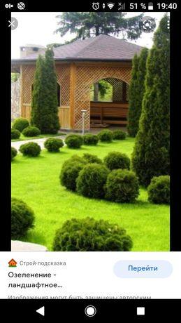Озеленения .благоустройство .дача.дом.