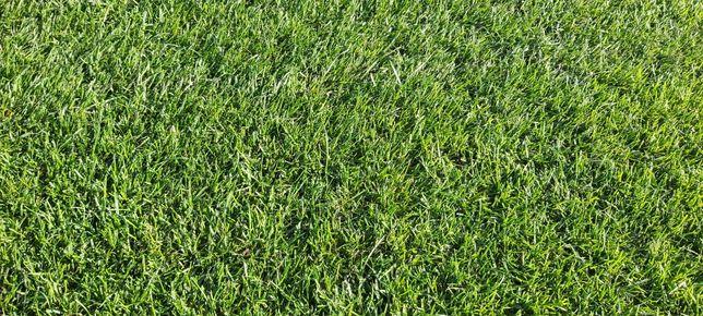 Trawa Z rolki. Najlepszy okres na zakładanie trawnika