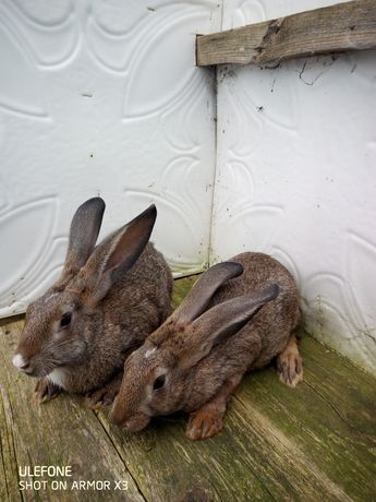 Кролики продаю не дорого