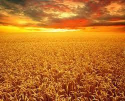 Wydzierżawie ziemie rolna