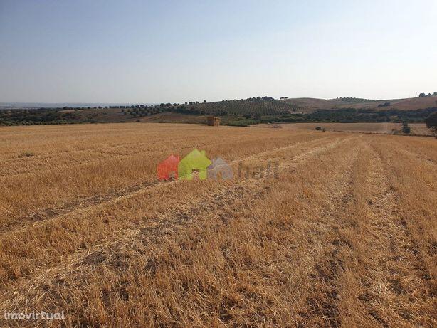 Terreno Agrícola 13ha- Mombeja, Beja, Alentejo