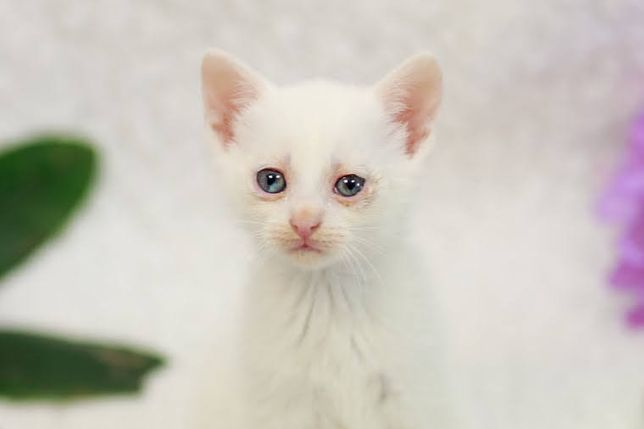 Maksyma - miesięczna, obyta koteczka