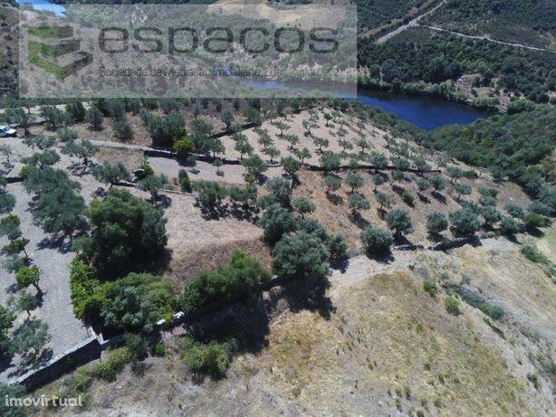 Quinta Rustica junto ao Rio Tejo