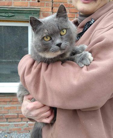 Отдам молодую кошку Азику