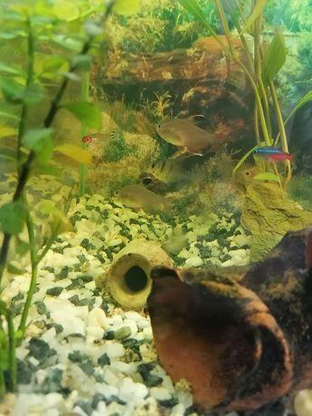 Peixes comunitários