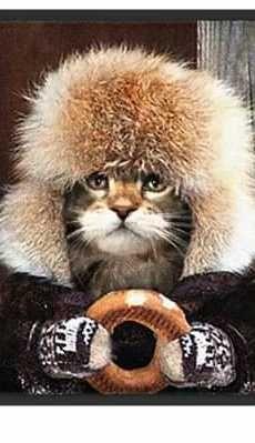 Доля. Очаровательный котеннок.