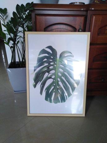 Obraz lisc rododendrona