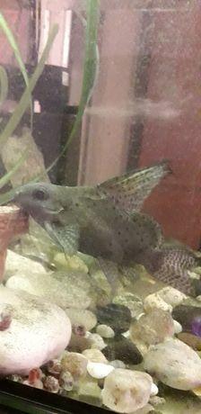 Аквариум с рыбками на 100лит.