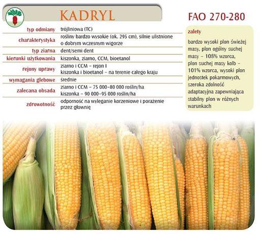 kukurydza Kadryl Nasiona kukurydzy 50 tyś nasion C1 FAO 270-28