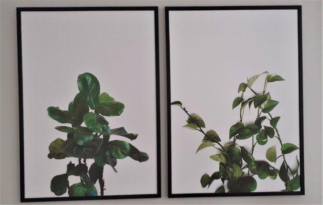 Plakaty w ramie rośliny