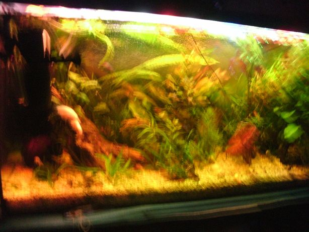 rosliny do akwarium