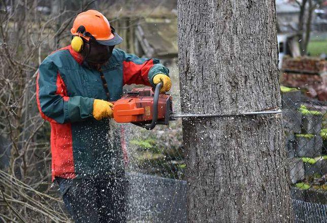 Wycinka drzew i krzewów, Wywóz odpadów, Czyszczenie działek [OGRODY]