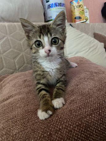 Котенок ищет дом!!