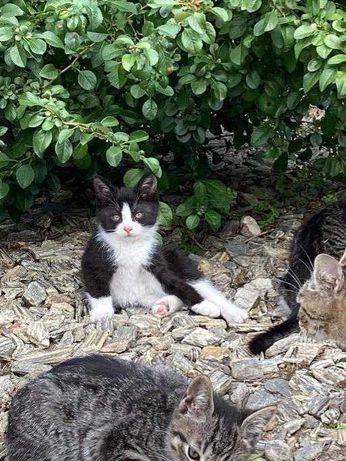 Mały kociak szuka domu. Pilne