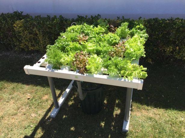 Hidroponia - Kit para 60 plantas - Loja Oficial
