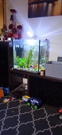 Vendo aquario de 60 litros com peixes e tudo incluido