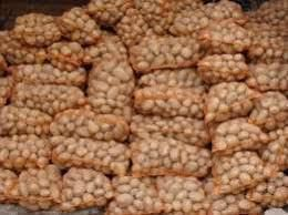 Ziemniak  jadalny Vineta