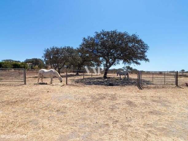 OURIQUE - Centro Equestre com fantásticas vistas sobre o campo