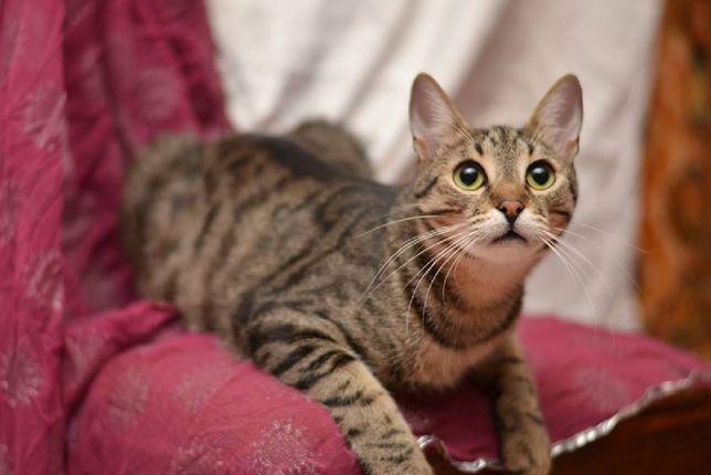 .отдам полосатого кастрированного котика, хороший характер