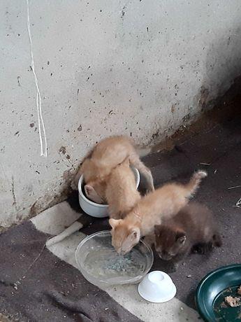 Dao se estes gatinhos
