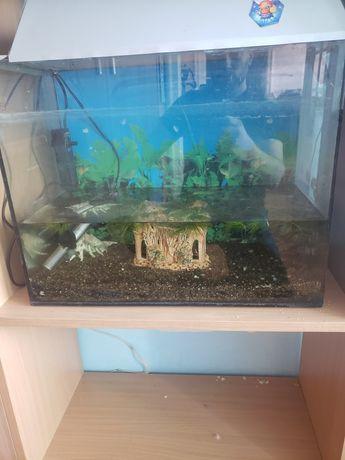 Терміново продам акваріум з кришкою, теном та фільтром та декором