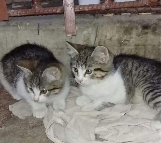 Подарю котенка,котята уличные,но ручные))