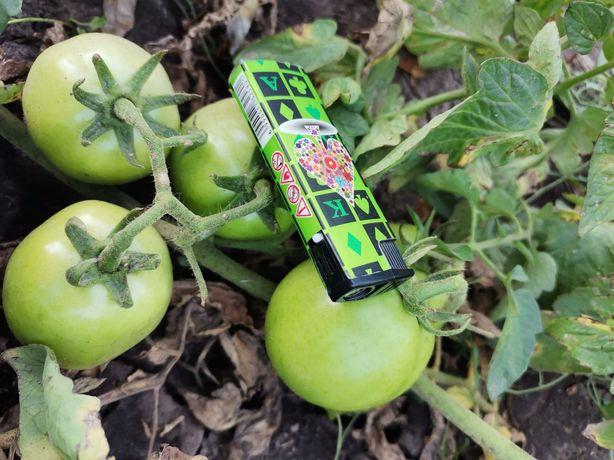 Продам лук и  зелёный помидор с поля ОПТ