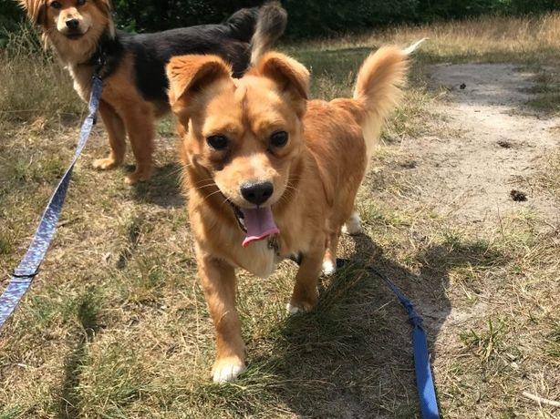 Jimmy – maleńki pies do adopcji