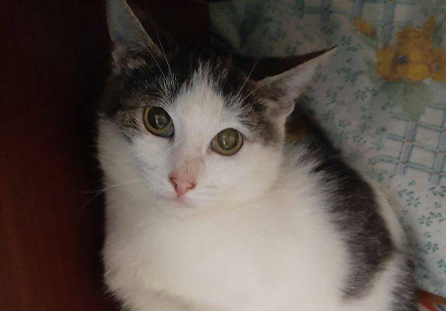 Котенок, девочка 4.5 мес