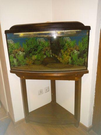 Akwarium narożne z wyposażeniem