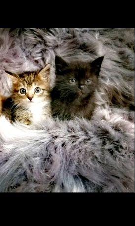 Котикі/кошенята/пухнастикі