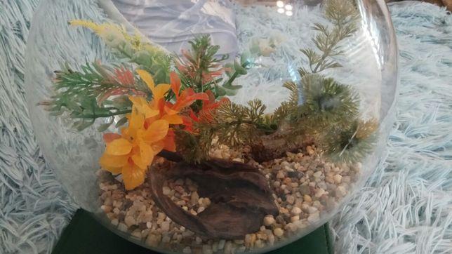 Akwarium dla złotej rybki