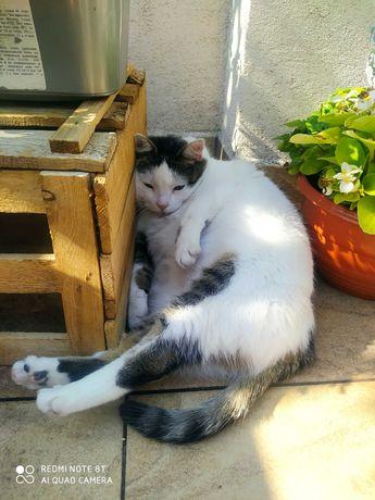 Zaginął kotek Rubin