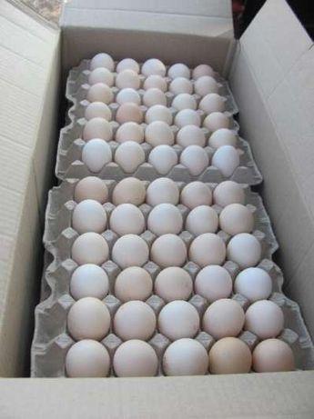 Инкубационное яйцо белой несушки