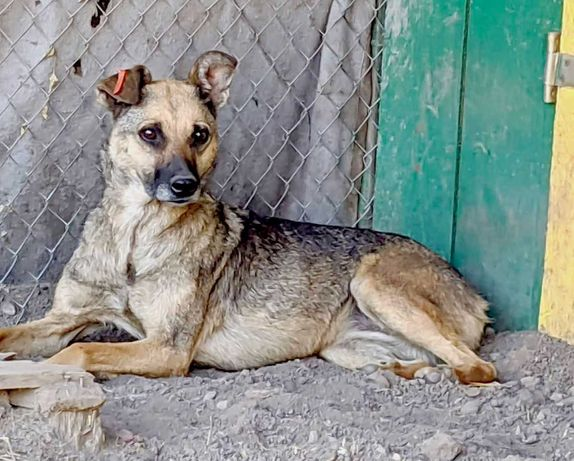 Одри - суперская собака охраняка