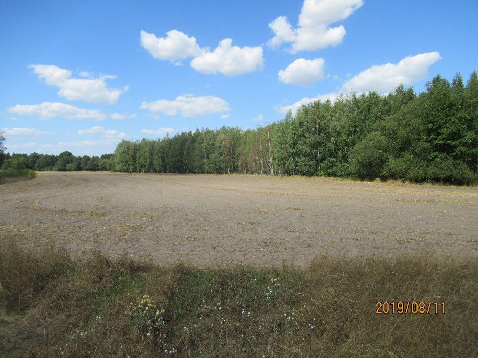 lazurowe osiedle Murzynowo Leśne - image 1