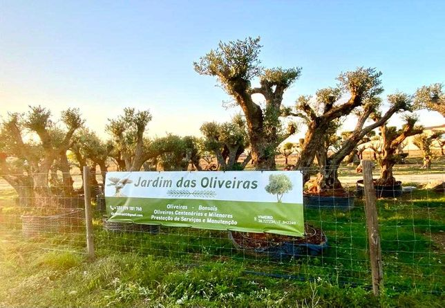 Oliveras de Jardim