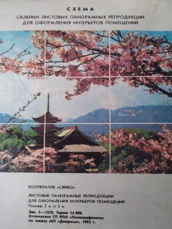 Фотообої   цвіт сакури