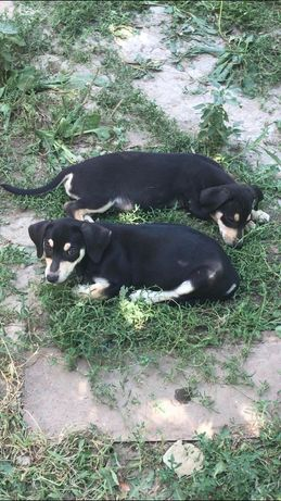 Двойняшки-щенята