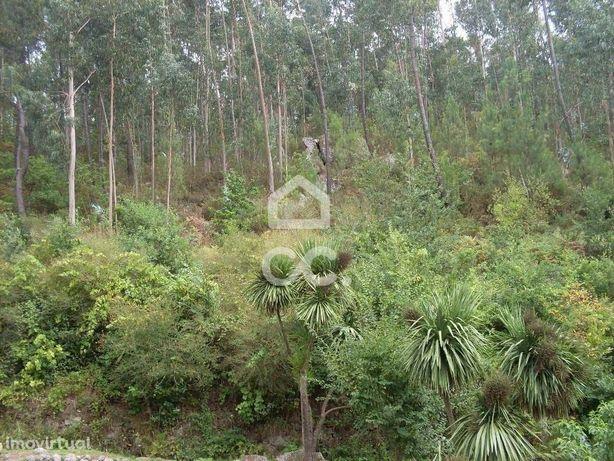 Terreno rústico - Terreno Florestal