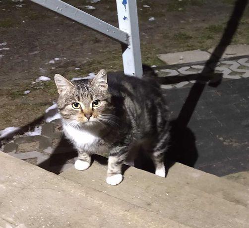 Znaleziona kotka szuka domu.