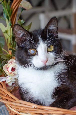 Черно- белый кот. Год