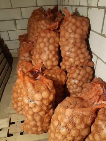 Ziemniaki jadalne vineta 0.80gr
