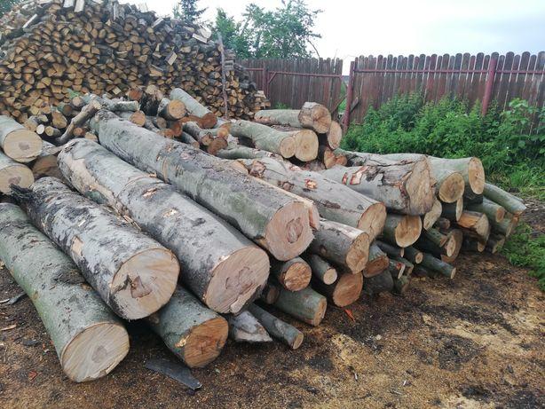 Drewno drzewo kominkowe sosna dąb brzoza grab